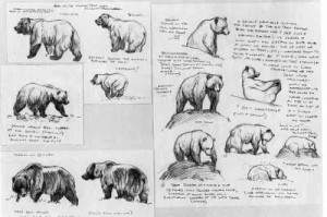 bear pages