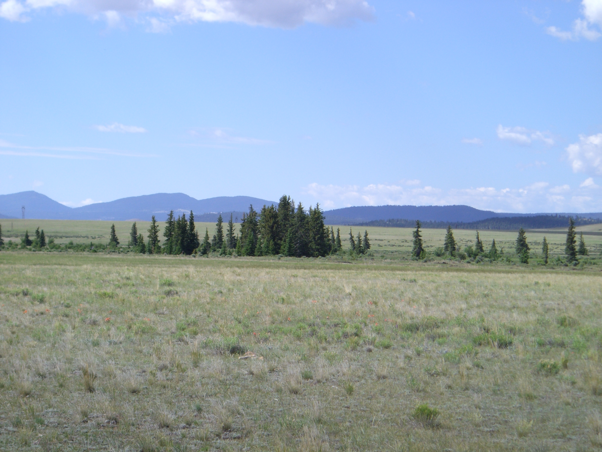 285 A Strange Cluster Of Spruce Trees Appearspletely Out Place Amidst The Short Grass Steppe South Parks Valley Floor
