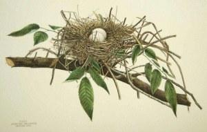 long nest