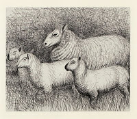 sheep sketch