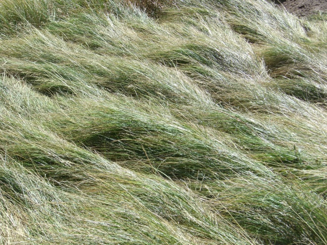 With plenty to see, far and wide -- including a swirl of grass at their feet.