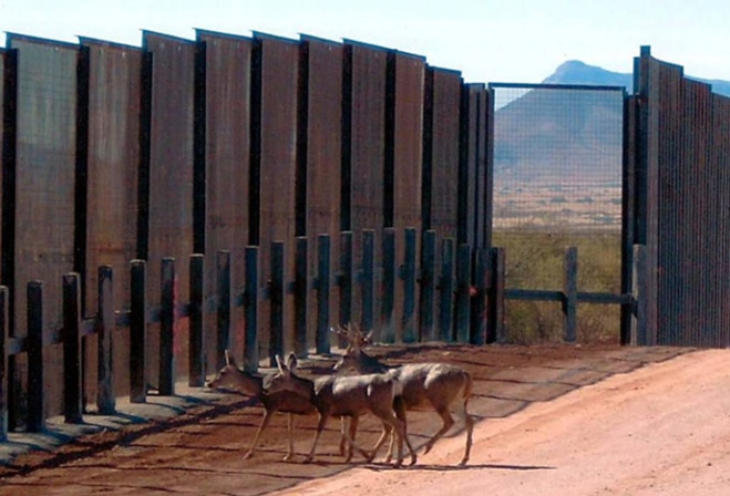 deer20at20border20wall_0