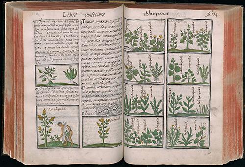 florentine-codex_500
