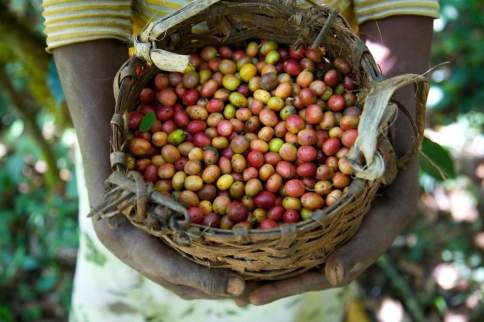 ethiopia-coffee-beans